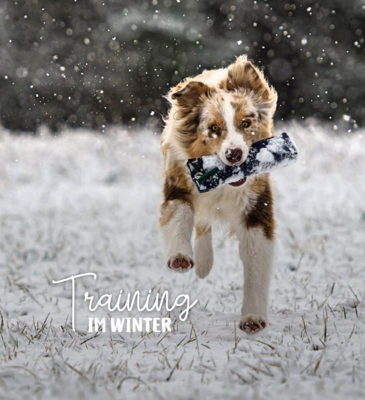 Apportieren von Dummies - Hunde sinnvoll beschäftigen und gleichzeitig die Bindung zu stärken