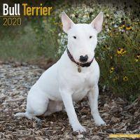 Kalender 2020 Bullterrier