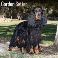 Kalender 2020 Gordon Setter