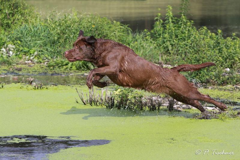 media/image/149560-K_Lab_choc_springend_Wasser.jpg