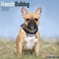 Kalender 2020 Französische Bulldogge / French Bulldog