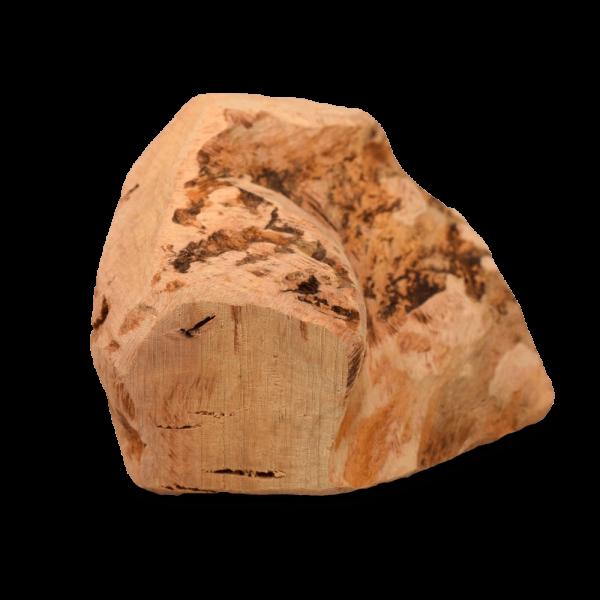Kauwurzel