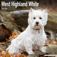 Kalender 2020 West Highland White Terrier / Westie