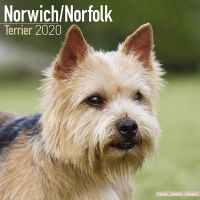 Kalender 2020 Norwich / Norfolk Terrier