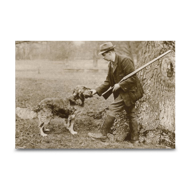 Reprint - Golden Retriever, ca 1904, Culham Brass