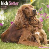 Kalender 2020 Irish Setter
