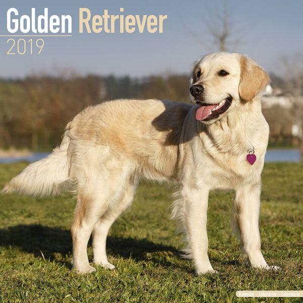 Hundekalender 2019