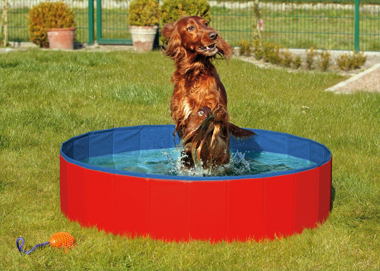 hundepool doggy pool schwimmbad f r hunde. Black Bedroom Furniture Sets. Home Design Ideas