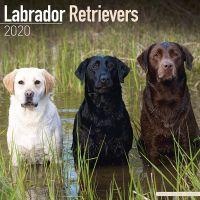 Kalender 2020 Labrador mixed / gemischt