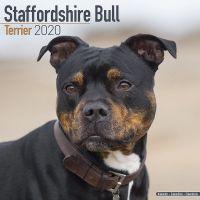 Kalender 2020 Staffordshire Bull Terrier