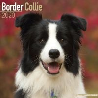 Kalender 2020 Border Collie