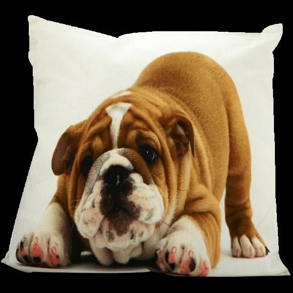 Kissen mit Englischer Bulldogge