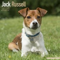 Kalender 2020 Jack Russel Terrier