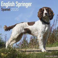 Kalender 2020 English Springer Spaniel