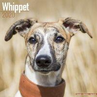 Kalender 2020 Whippet