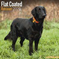 Kalender 2020 Flat Coated Retriever