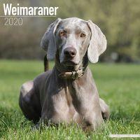 Kalender 2020 Weimaraner