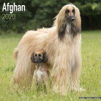 Kalender 2020 Afghane