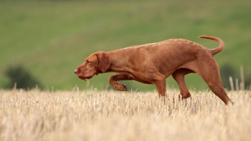 media/image/bg_vorstehhund.jpg