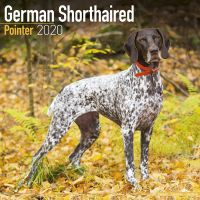 Kalender 2020 Deutsch Kurzhaar - German Shorthair Pointer