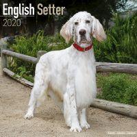 Kalender 2020 English Setter