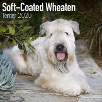 Kalender 2020 Soft Coated Wheaten Terrier