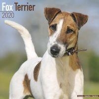 Kalender 2020 Foxterrier