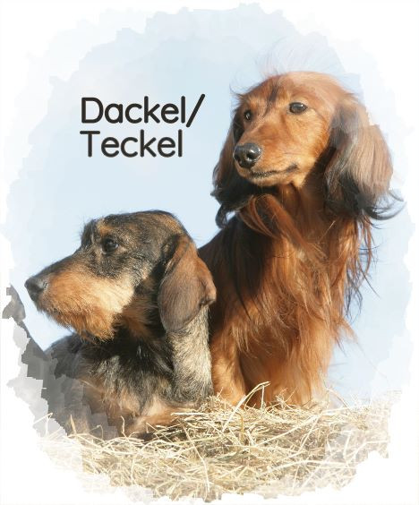 Spezial: Dackel