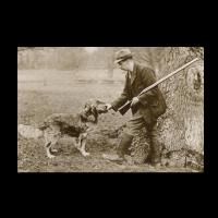 Reprint - Golden Retriever, ca 1904, Culham Brass
