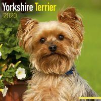 Kalender Yorkshire Terrier 1